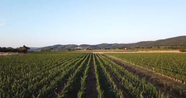 Itálie, Toskánsko. Letecký pohled na vinice v krajině