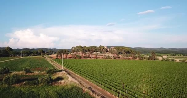 Piombino, Toscana, Italy. Aerial view of vineyards in the countryside