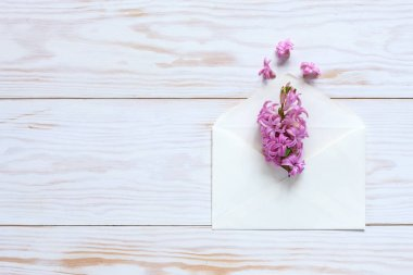 Pink Hyacinth in white paper envelope. Top view, close-up, flat lay on white wooden background
