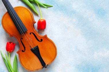 Old violin and two red tulips. Valentine day, 8 March concept. Top view, close-up on blue sky concrete background