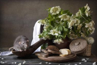 Cute little gray rat sits in a large wooden spoon with bread and