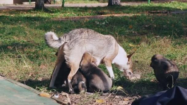 kojení bez domova štěňátka psa bez plemeno, Maminka kojí miminka