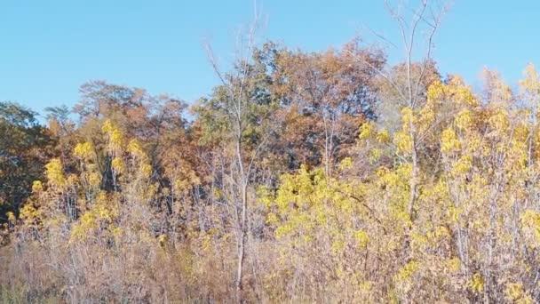 suché podzimní les porostlých větví