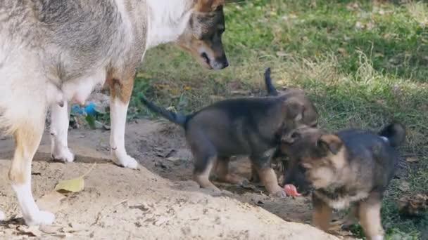 bezdomovci štěňata psy hrát si venku s mámou, bojují a vypadá