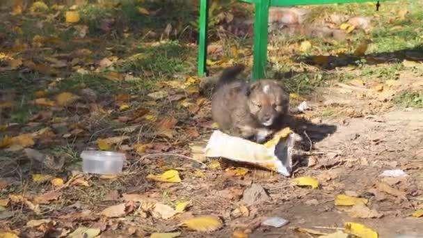 Obdachloser Welpe spielt mit dem Paket, räumt den Müll auf der Straße weg