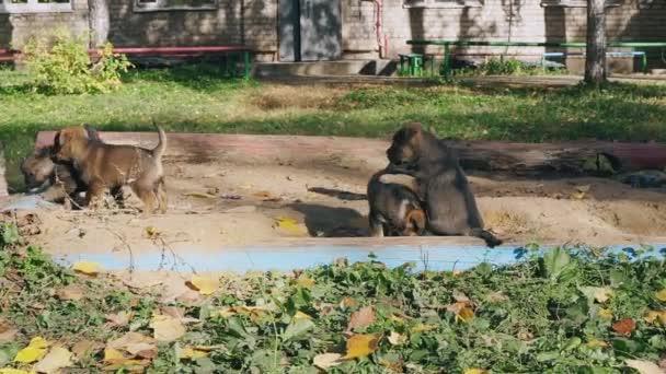 Obdachlose Welpen ohne Rasse spielen mit Mama auf der Straße im Hof eines Wohnhauses