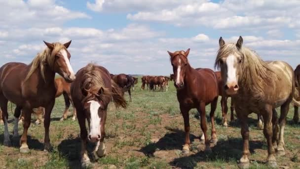 Mustangs faces close-up, wild horses and horseflies, animals look at camera