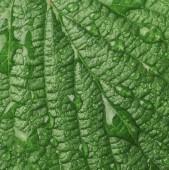Uzavřít zobrazení makra s texturou s malinovou listí s kapkami vody