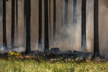 Orman yangını, bir orman yangın.