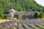 Abbey of Senanque and blooming lavender field, France