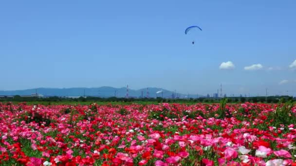 A clear blue sky and a field of poppies