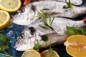 Lahodné čerstvé ryby. Ryba s aromatických bylin, koření a zeleniny - zdravé jídlo, strava nebo vaření koncept