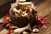 škála syrové houby na dřevěný stůl. lišek, ústřice a jiné čerstvé houby