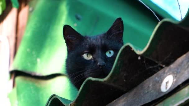 macska ül a tetőn