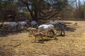 Fényképek vadon élő állatok az állatkert természeti háttér