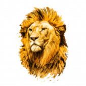 lví hlava izolované na barevném pozadí
