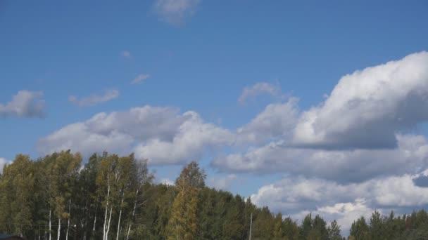 Letecké video příroda. Let nad levandulová louka. Zemědělství průmysl scénu. Přírodní scéna složení