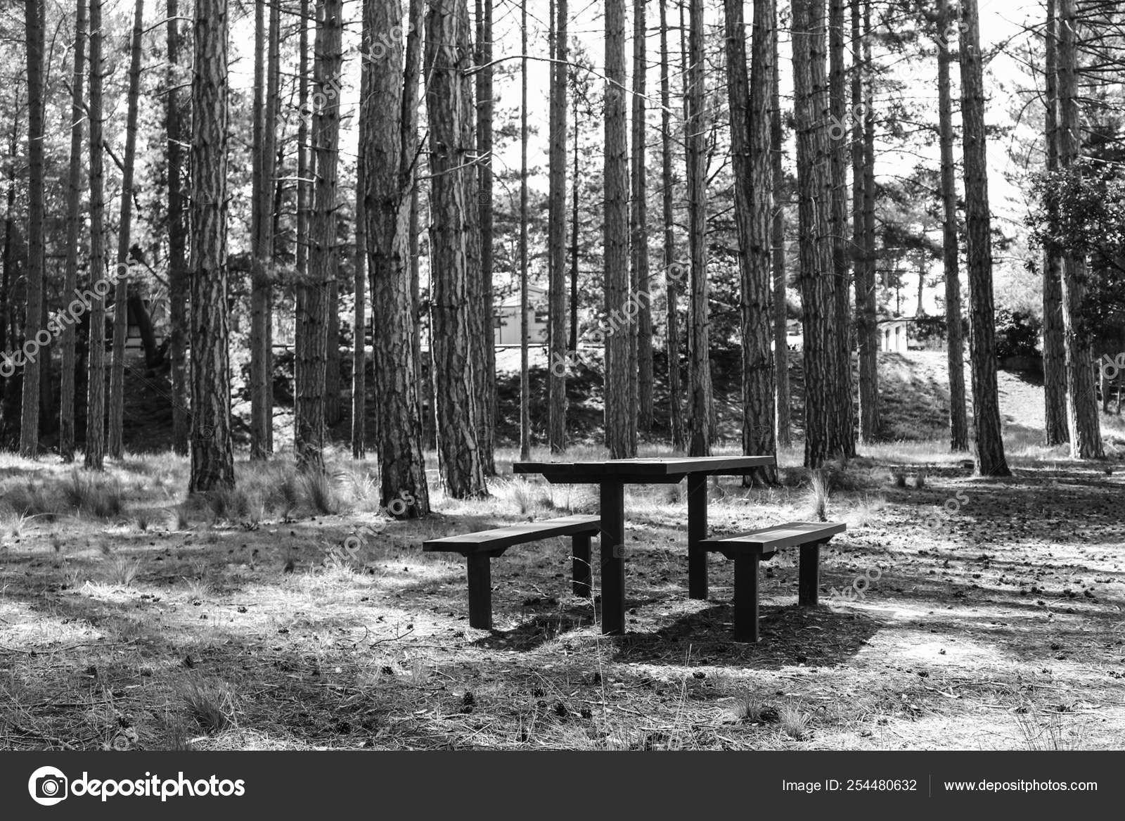 Wondrous Wooden Picnic Table And Bench Seats In The Middle Of A Pine Gmtry Best Dining Table And Chair Ideas Images Gmtryco