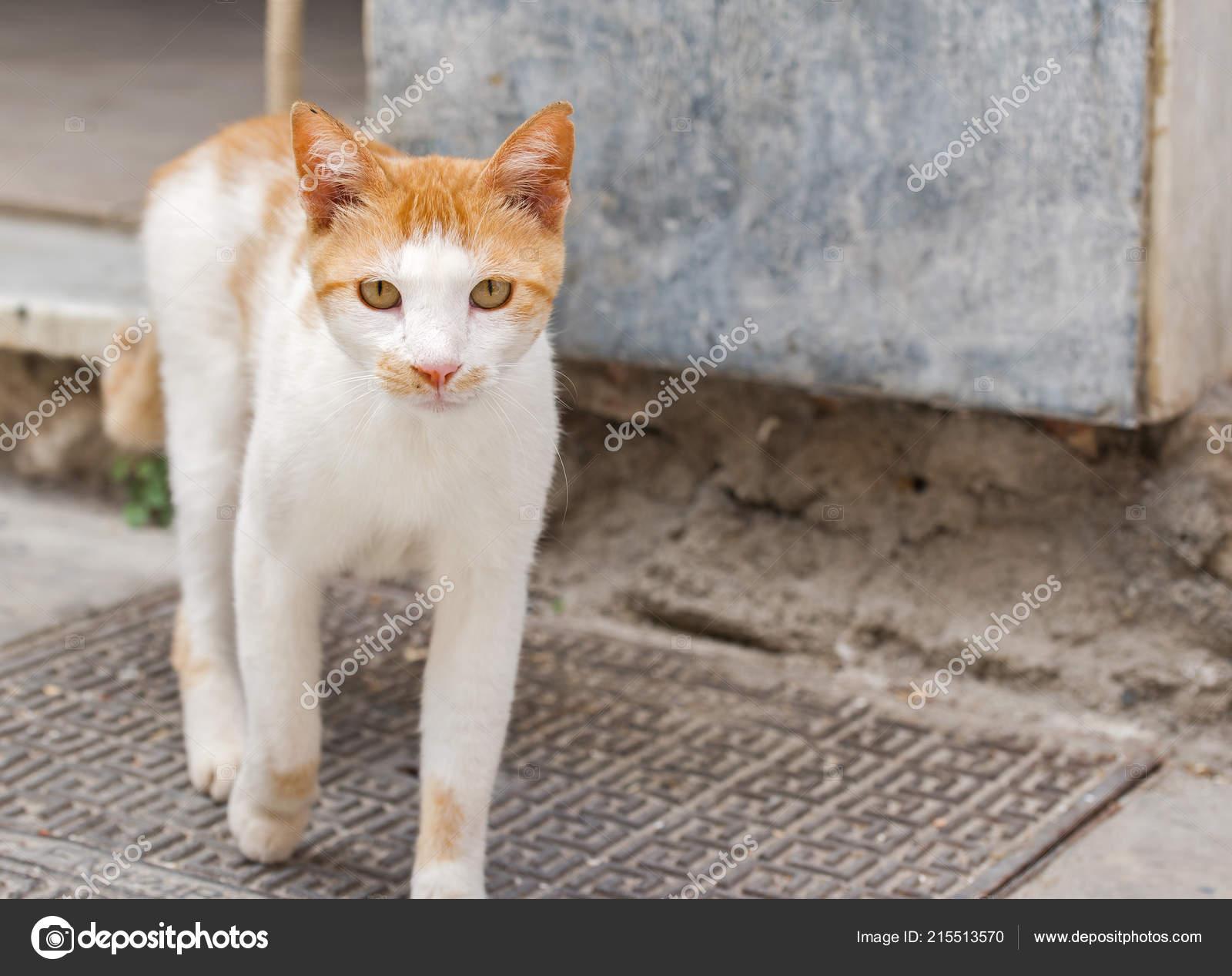 horká a krásná kočička