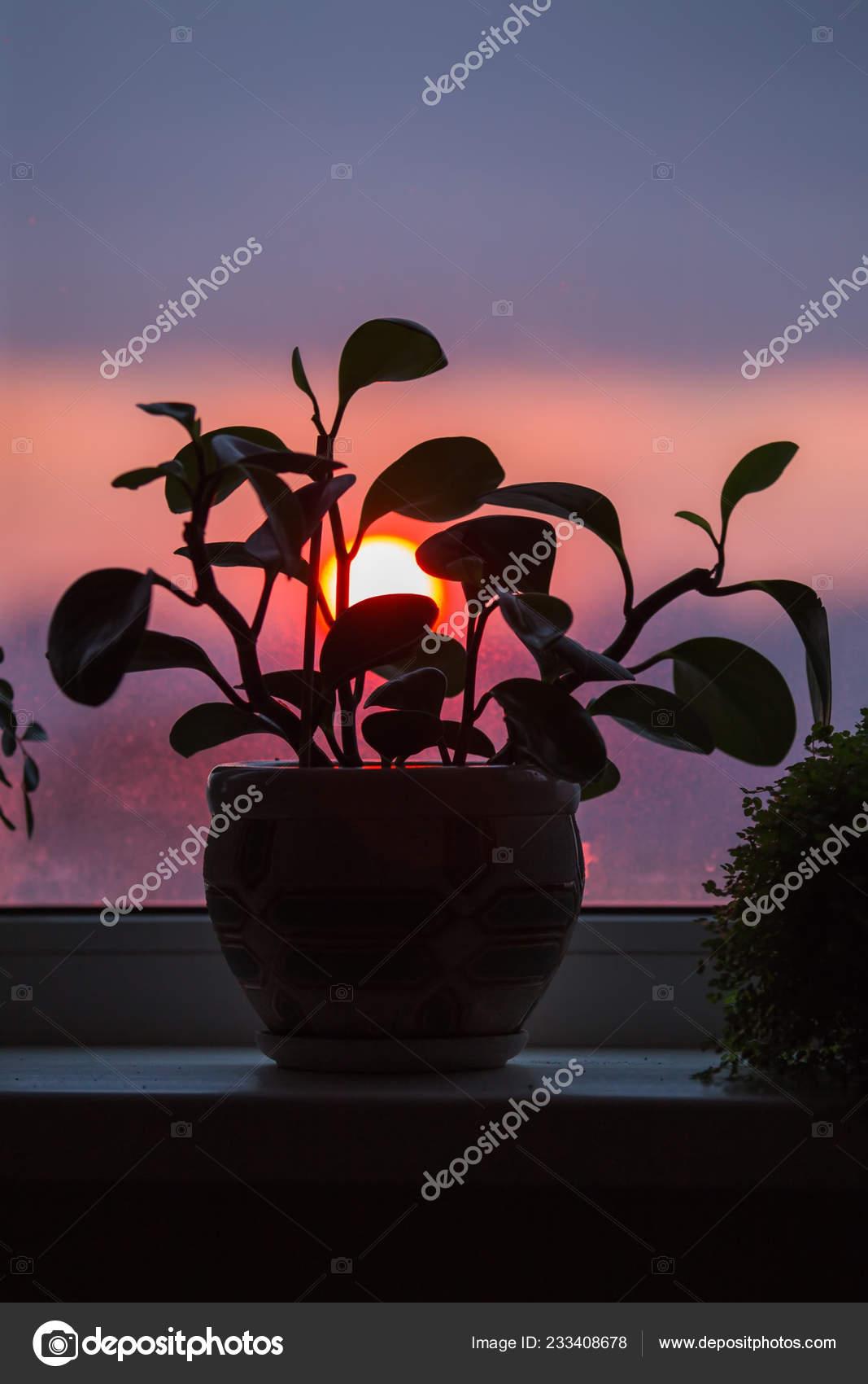 https://st4.depositphotos.com/14740706/23340/i/1600/depositphotos_233408678-stock-photo-house-plant-pot-stands-window.jpg