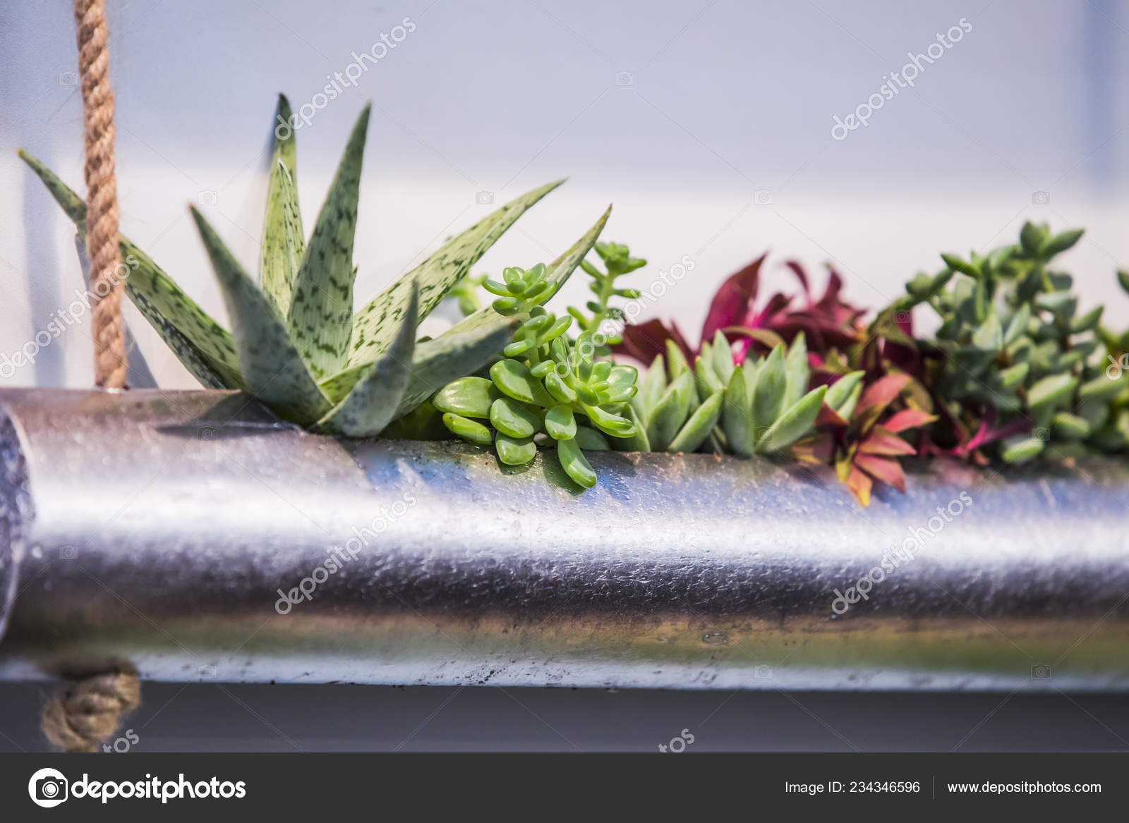 Close Group Succulents Arrangement Metal Vase Variety Succulents Planted Pipe Stock Photo C Olga Prava 234346596