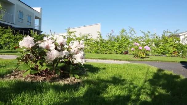 Krátký film s pomalým výhledem na dvorku se zelenou trávou, rododendronových keřů a jiné zelené rostliny na slunečný letní den.