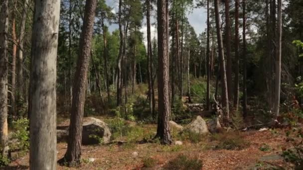 Gorgeous view of  forest rocky hill with green pine trees on blue sky background. Beautiful nature landscape backgrounds. Sweden, Europe.
