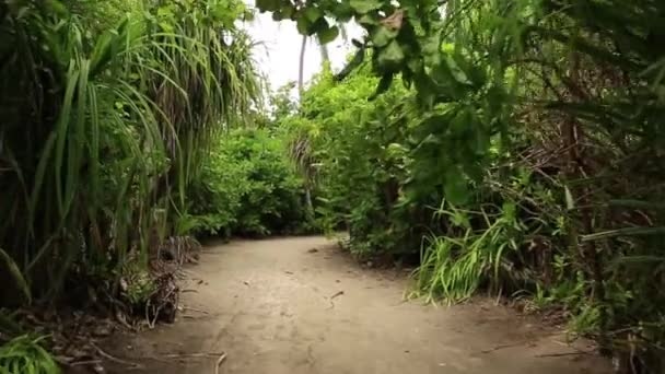 View of white sand pathway in green tropical jungle. Green palm trees and green plants on grey sky background.