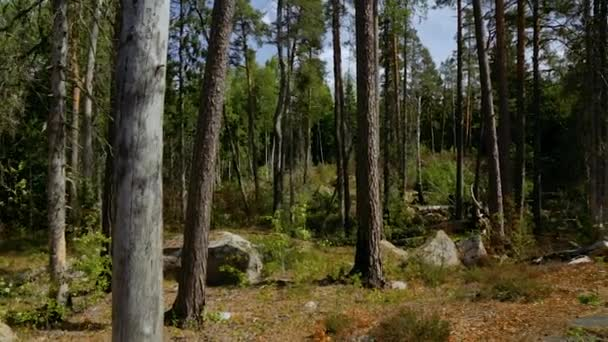 Beautiful view on nature landscape from rocky forest hill. Tall trees, green plants, yellow grass.  Beautiful nature backgrounds. Sweden, Europe.