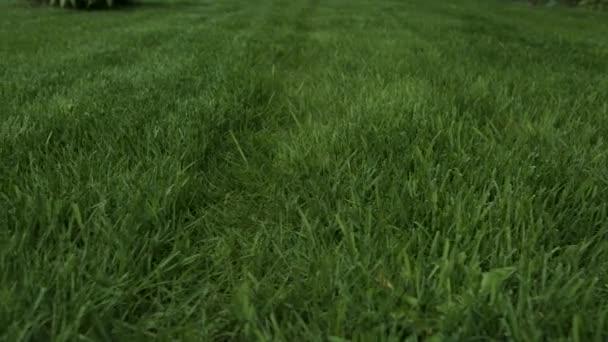Gyönyörű kilátás az udvarra, saját kert. Zöld fű gyep. Gyönyörű hátterek.