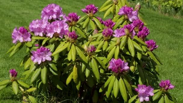 Zavřete pohled na kvetoucí květinové květy na zelené travnaté pozadí. Nádherná pozadí.