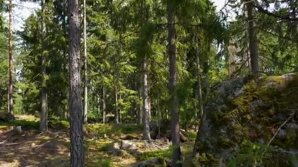 Nádherný pohled na skalnatou krajinu v lese. Vysoké zelené borovice na modrém nebeském pozadí.