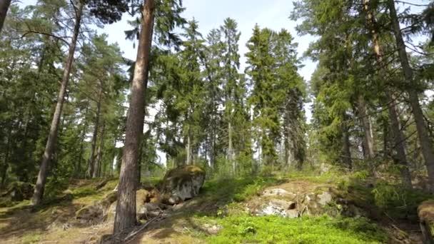 Nádherný pohled na skalnatou krajinu v lese. Vysoké zelené borovice na modrém nebeském pozadí. Úžasná krajinná pozadí. Švédsko, Evropa.