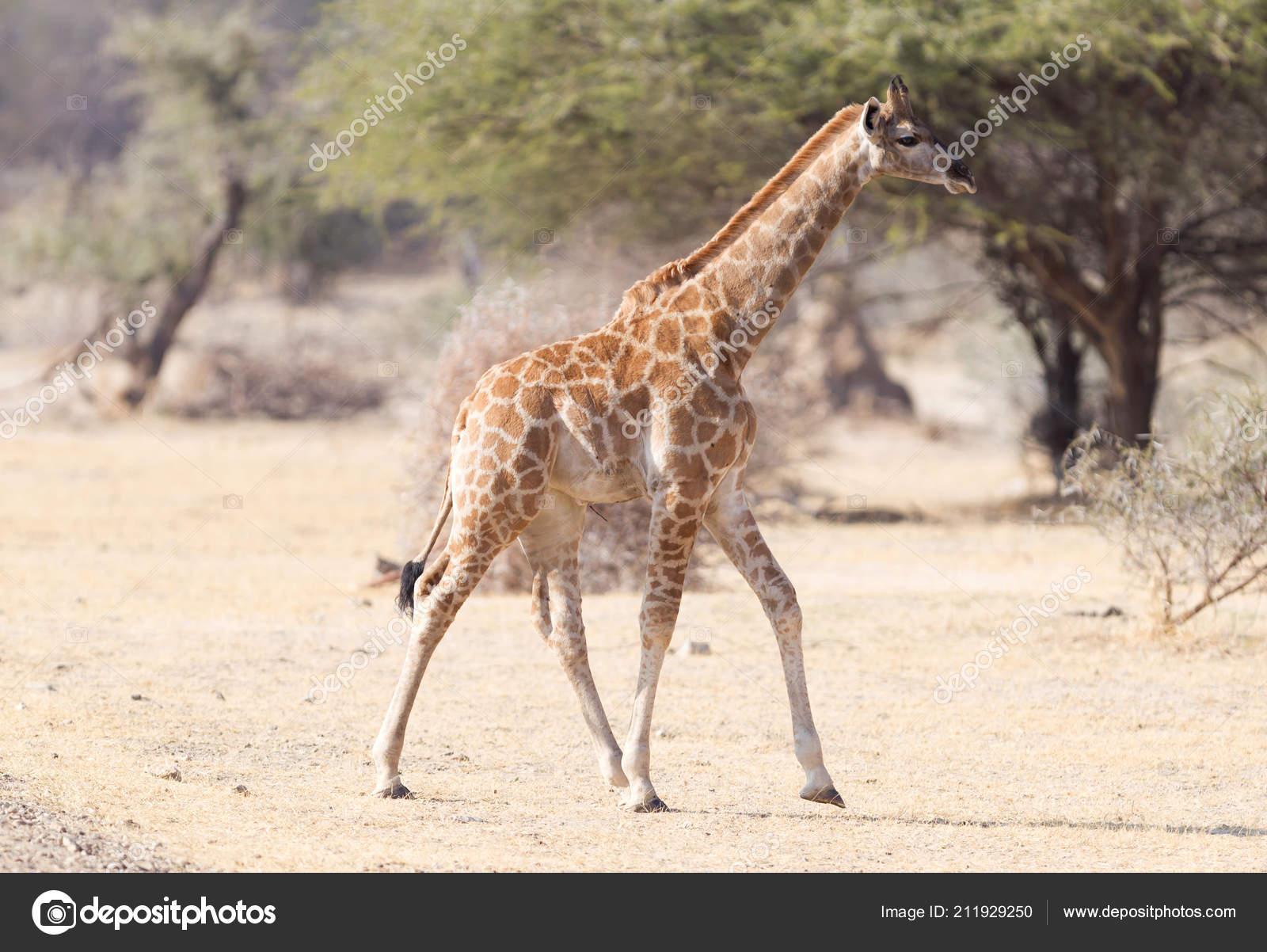 Namibia incontri single