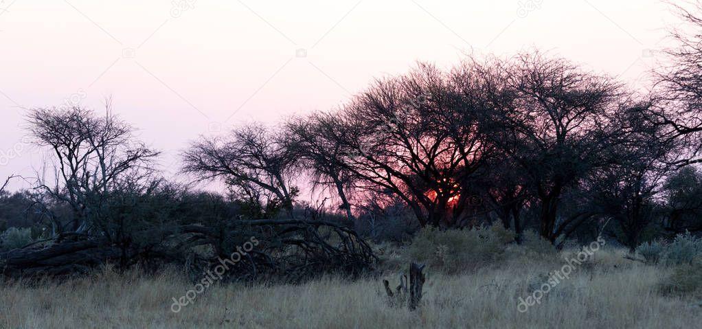 Pink sunset in the Makgadikgadi pans, Botswana