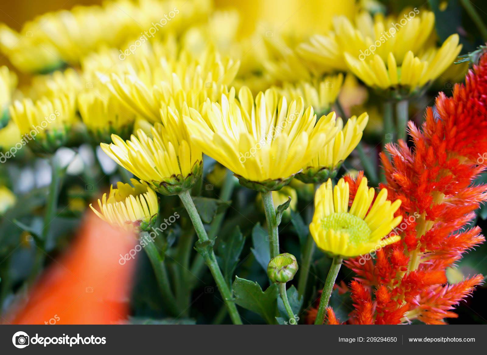 Closeup Yellow Flowers Orange Small Garden Show Music Winter Flowers