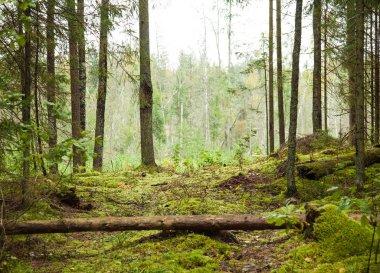 Nature landscape - green dense wood