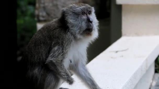 Sitting Monkey Close-Up