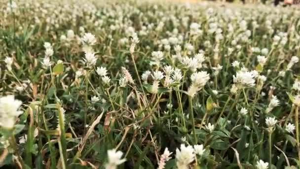 divoké květiny v přírodě