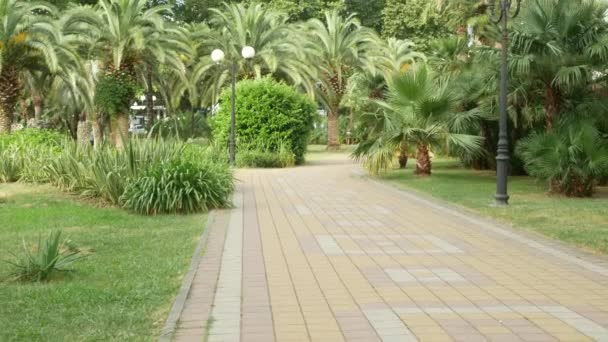 Pohled z parku s palmami v centru města. 4k
