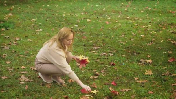 mladá blond žena chodí přes podzimní park, sbírá barevné listí spadané javor