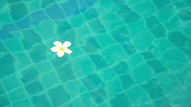 Keře, plumeria, květ plovoucí v křišťálově čisté modré vody bazénu