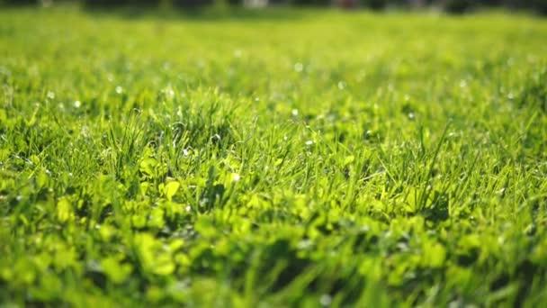 Close-up. šťavnatou zelenou mladou trávu na slunci, zářivě svěží pozadí, textura