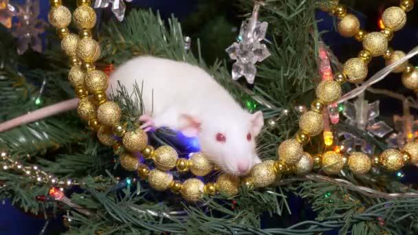 bílá krysa, vánoční zvíře 2020. leží na vánočním stromku mezi zlatem a více barevnými girlandy