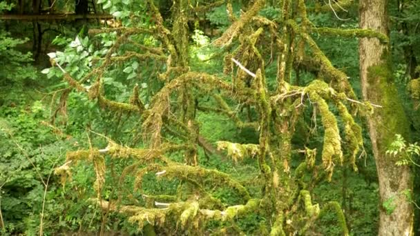 zblízka větve stromů pokryté mechem. mystický Les.