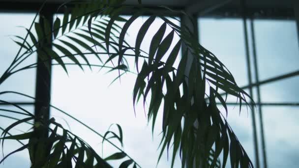 sziluett. beltéri növény dátum tenyér háttér egy nyitott ablak