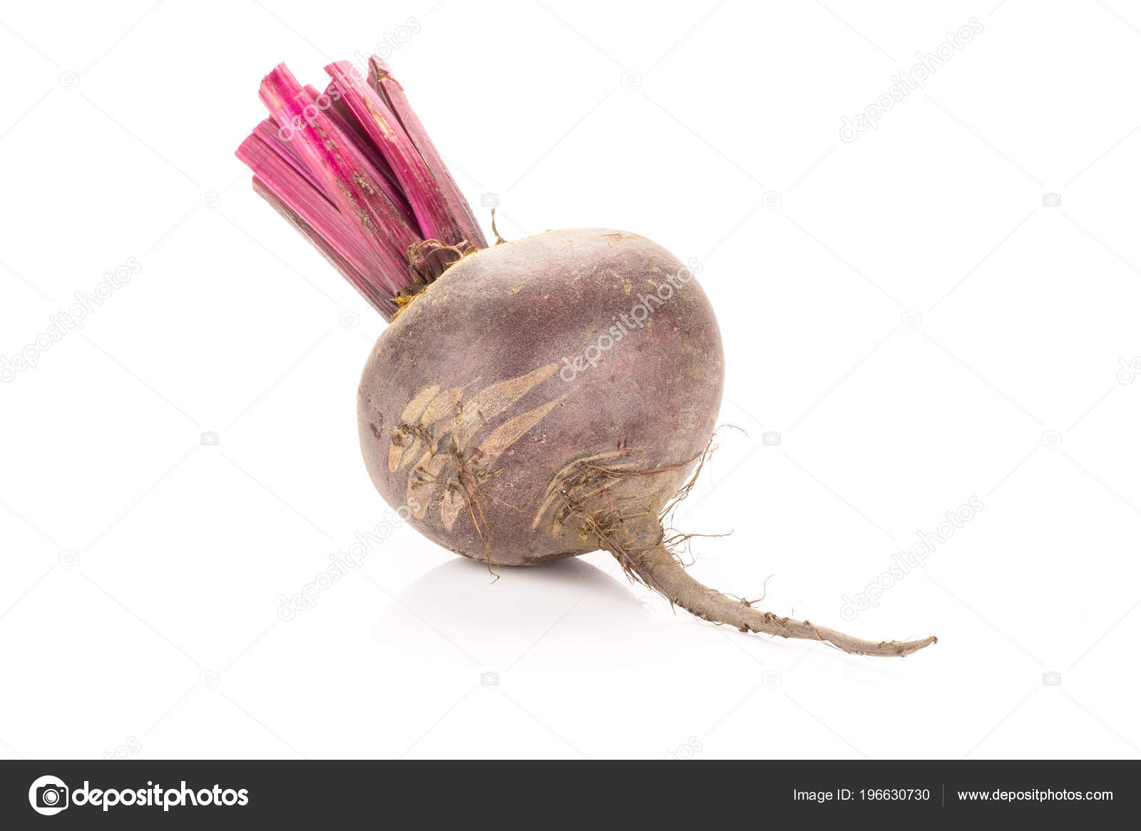 one red beet cut tops isolated white background one bul stock