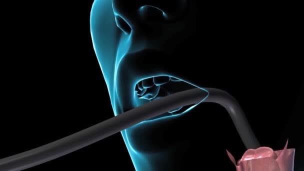 3D Animaton the female Esophagus Endoscopy. Esophagus channel seen from an endos