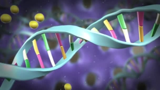 Structure Of The Human Dna Double Helix With Cells Division