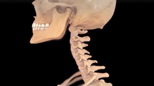 3D animace krční páteře s meziobratlových plotének